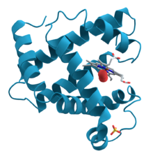 Proteínas muy básicas para alimentar la musculación del deportista
