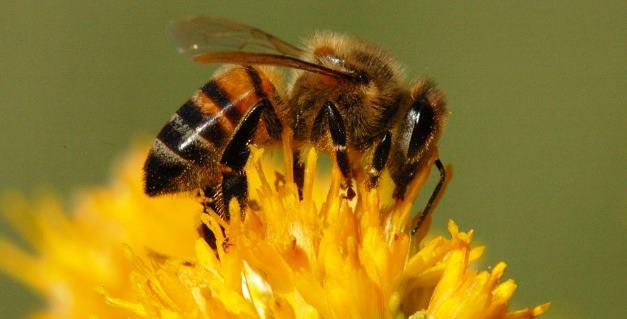 abeja-y-miel