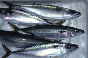 Los beneficios del pescado azul en la dieta