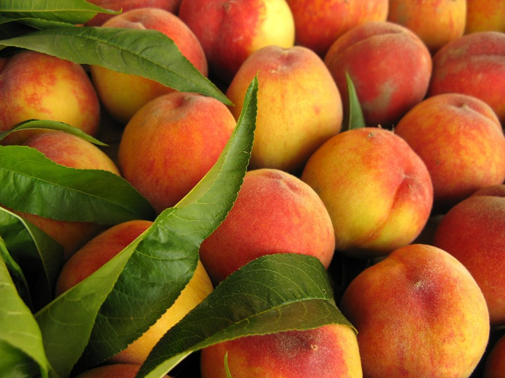 Peaches perfect with leaves