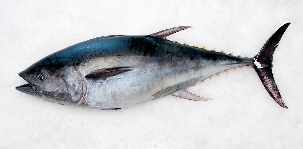 El atún, un cóctel de Omega 3 y proteínas