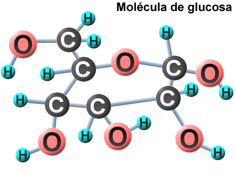 La glucosa y su importancia en el organismo