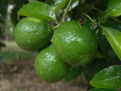 vitaminas limon